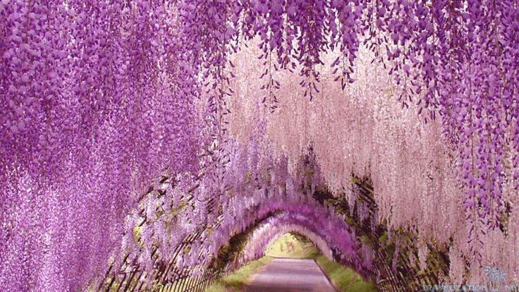 Magical Places Visit Purple Gardens World Romantic