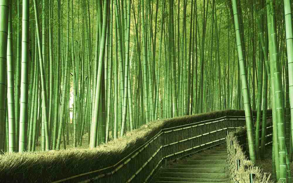 Ashikaga Flower Park Ashikaga Japan Magical Places Visit Purple Gardens World Romantic