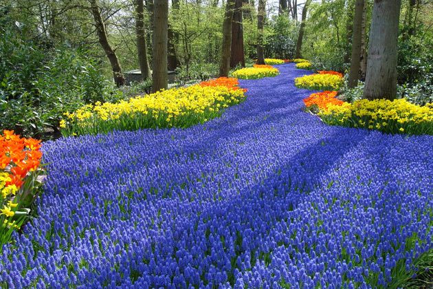 Holland Keukenhof River of Flowers Romantic Waitomo Caves Magical Places to Visit around the world Glow Worm Cave New Zealand Panjin Red Beach China