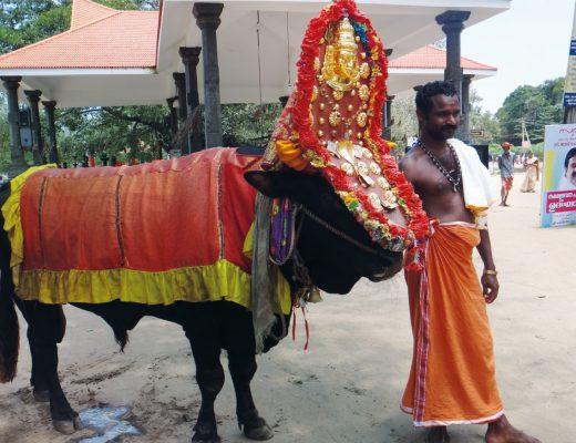 My adventures in Kerala