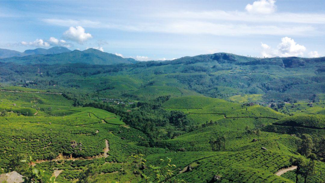 Kerala - India - Travel - Munnar