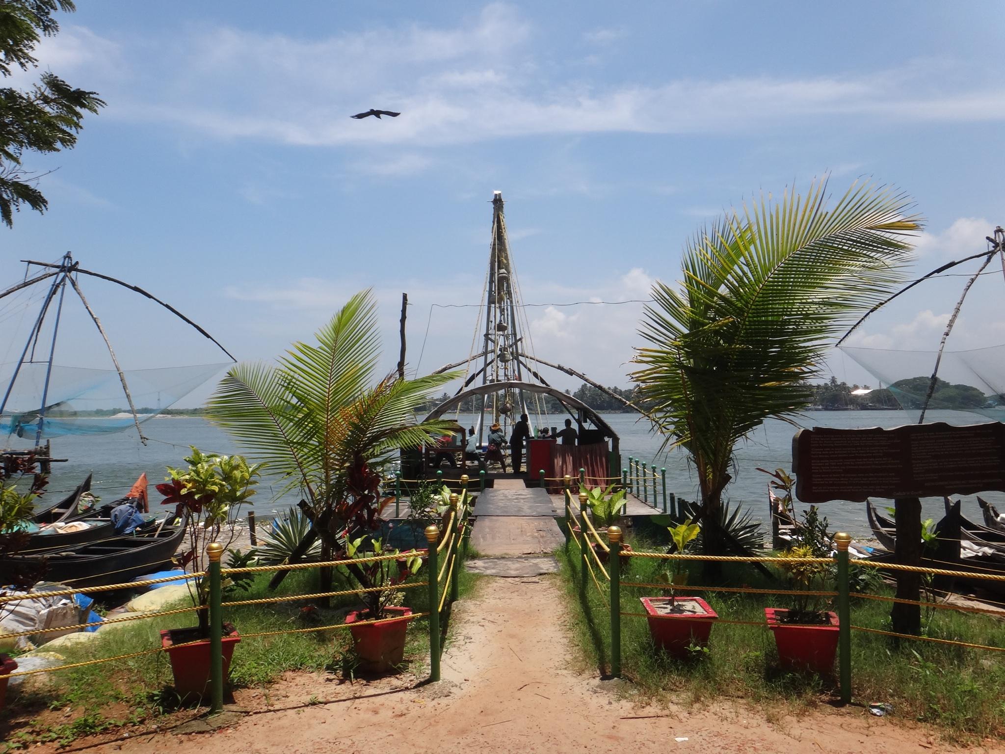 fisherman - kochi - kerala - india