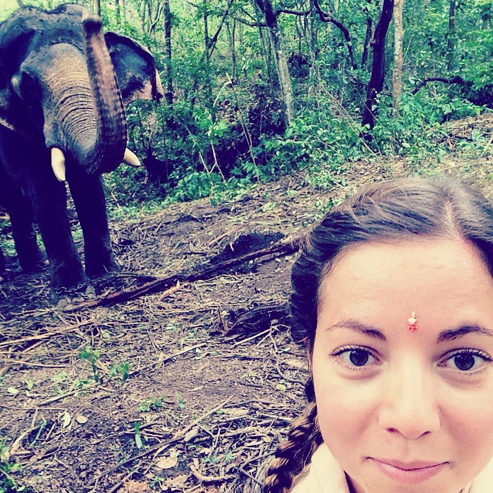 Elephant - Kerala - Selfie - India - Forest