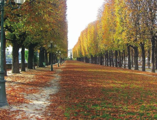 Paris Autumn BiniBlog LocalBini Fall