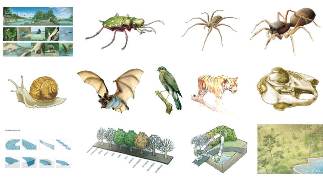 Interview Interview Graphic Design Art Science Freelance Business Scientific Illustrator Andrés Salazar