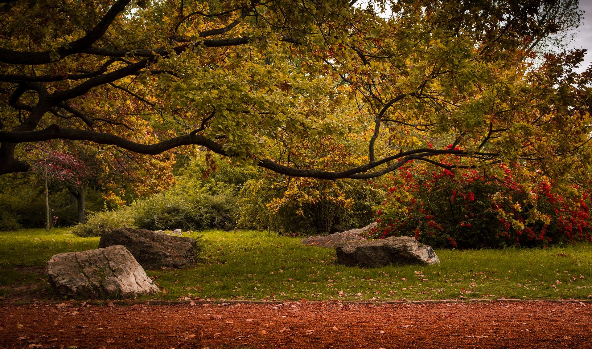 Városliget Park City Park Green Budapest Garden Nature Walk Local Experience