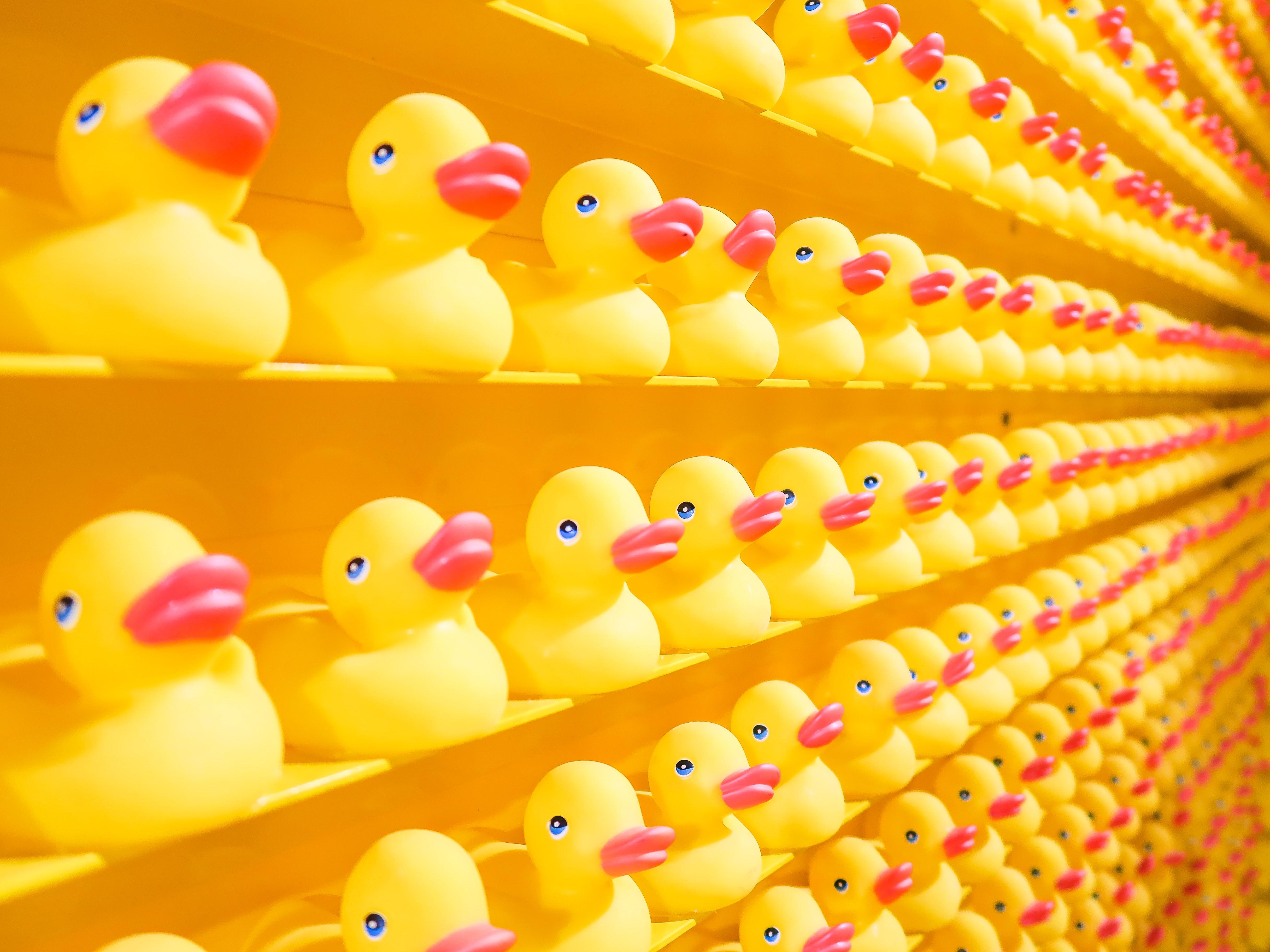 rubber ducks virtual exhibition andy warhol contemporary classic frida khalo google travel localbini biniblog rubber ducks contemporary art virtual exhibition