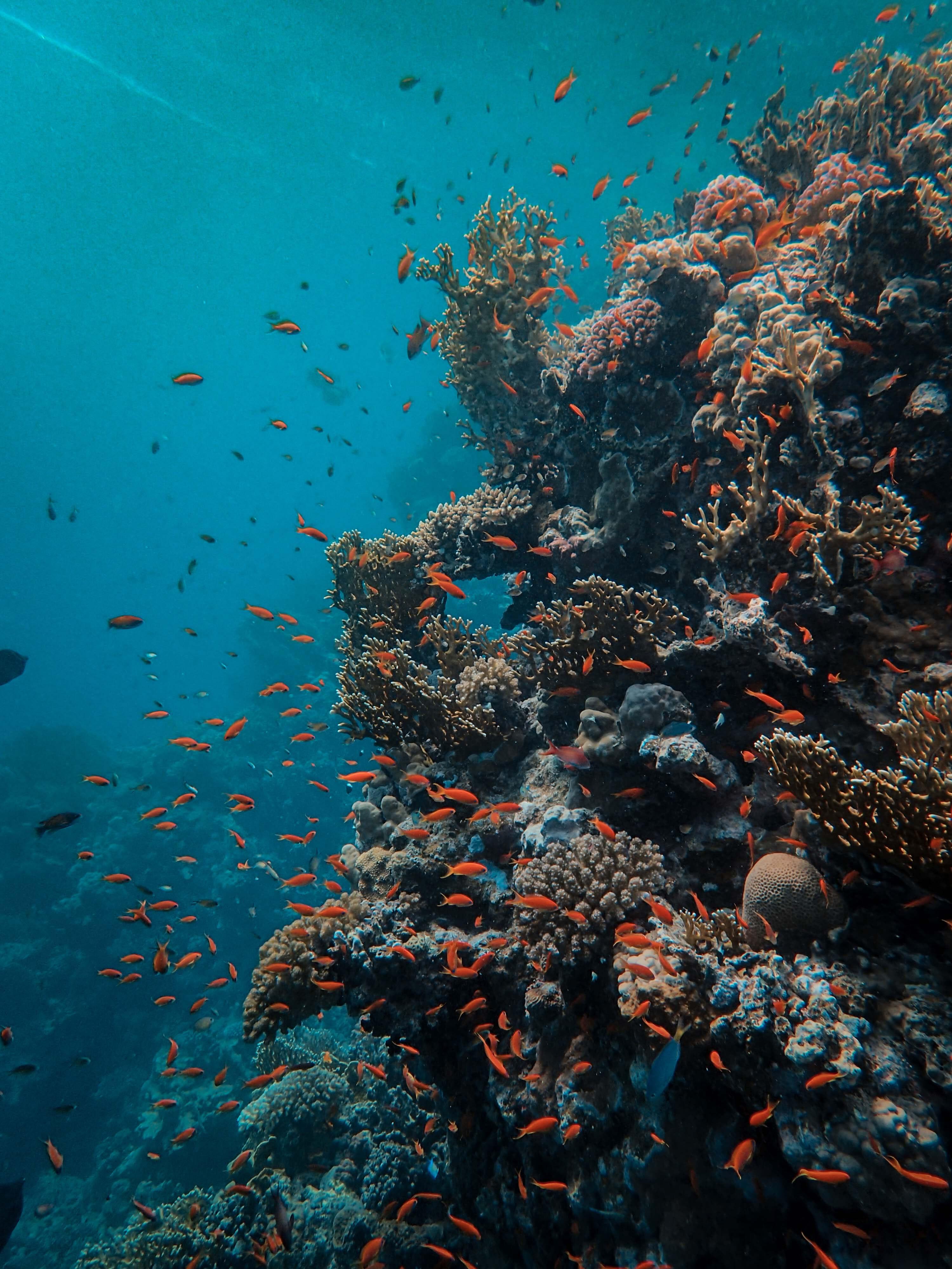 live camera coral reef marine life pacific ocean fish underwater home, rustic, plant, wooden table, terrarium, virtual, localbini, biniblog, ecofriendly