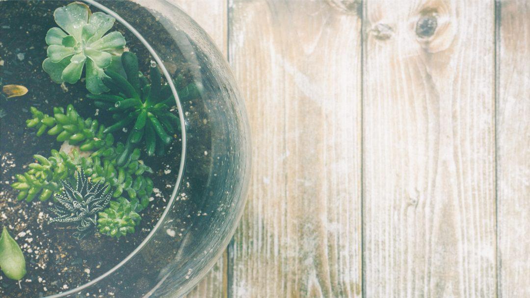 home, rustic, plant, wooden table, terrarium, virtual, localbini, biniblog, ecofriendly